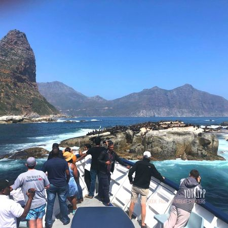 Drumbeat Charters to Seal Island: Hout Bay Cruises: Cape Town Tours: Seal Tours