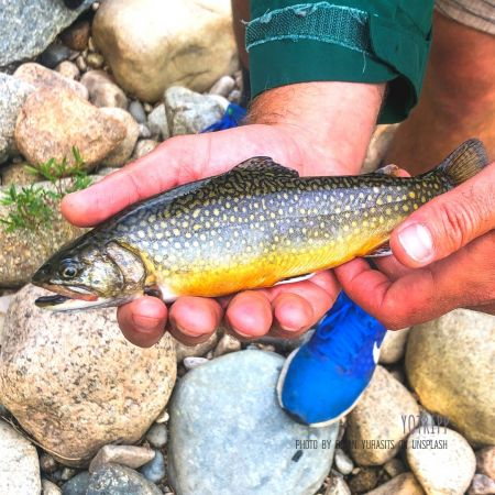 Rainbow Trout in Hampshire, UK